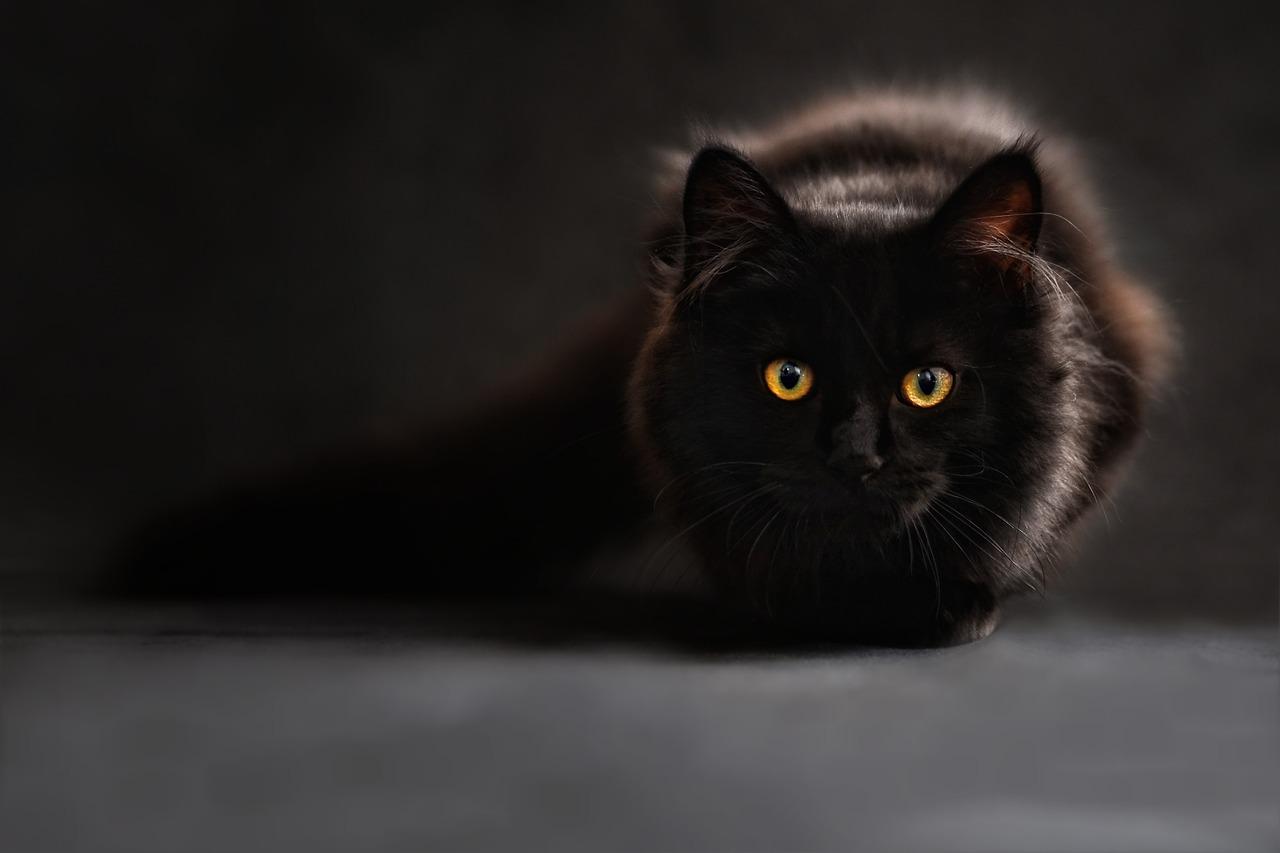cat-694730_1280