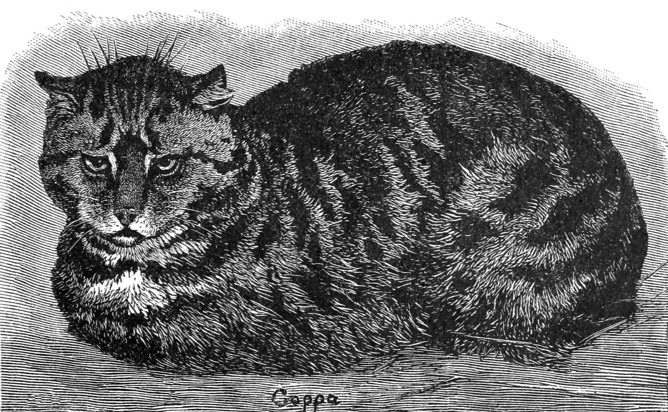PSM_V37_D105_English_tabby_cat