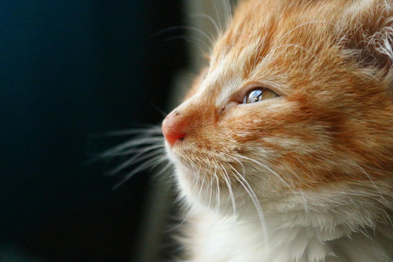 kitten-1049129_1280